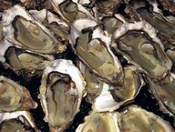 Oysters from Claires Marennes Oleron N2