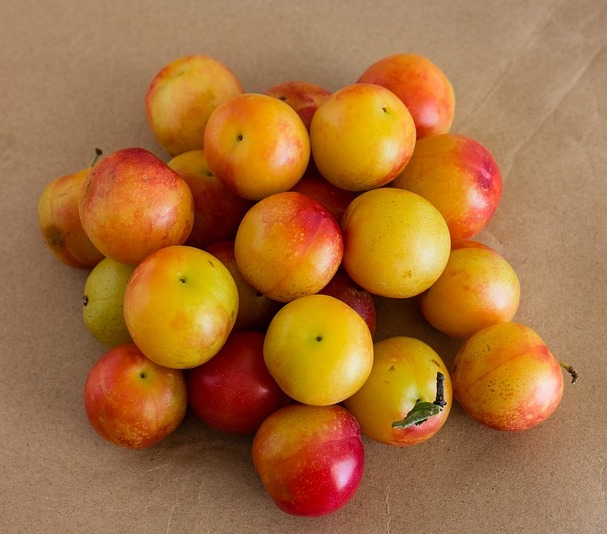 Cherry Plum France 1kg