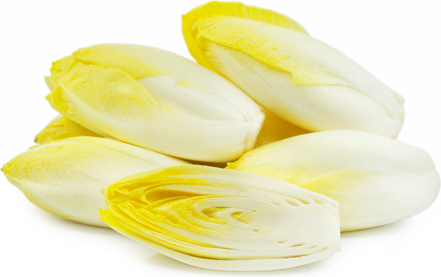 CHICORY LOCAL PRODUCTION FRANCE 3.5KG 3.5kg